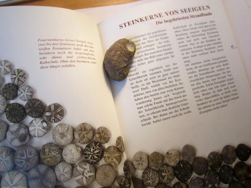 Steinkern02
